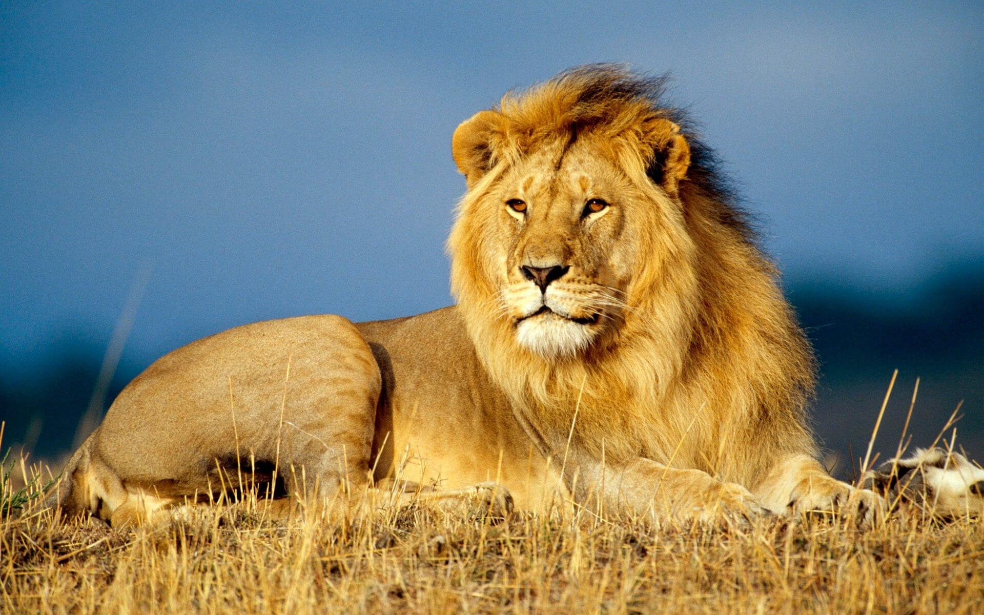 Gir Lion Deaths: A clarion call to save the Pride